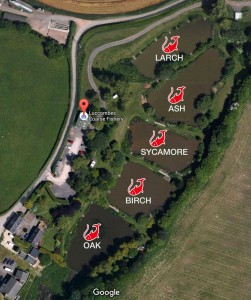Fishing Ponds Satellite View